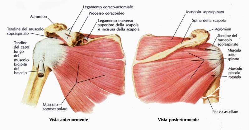 I cuscini gonfiabili per sedersi a emorroidi
